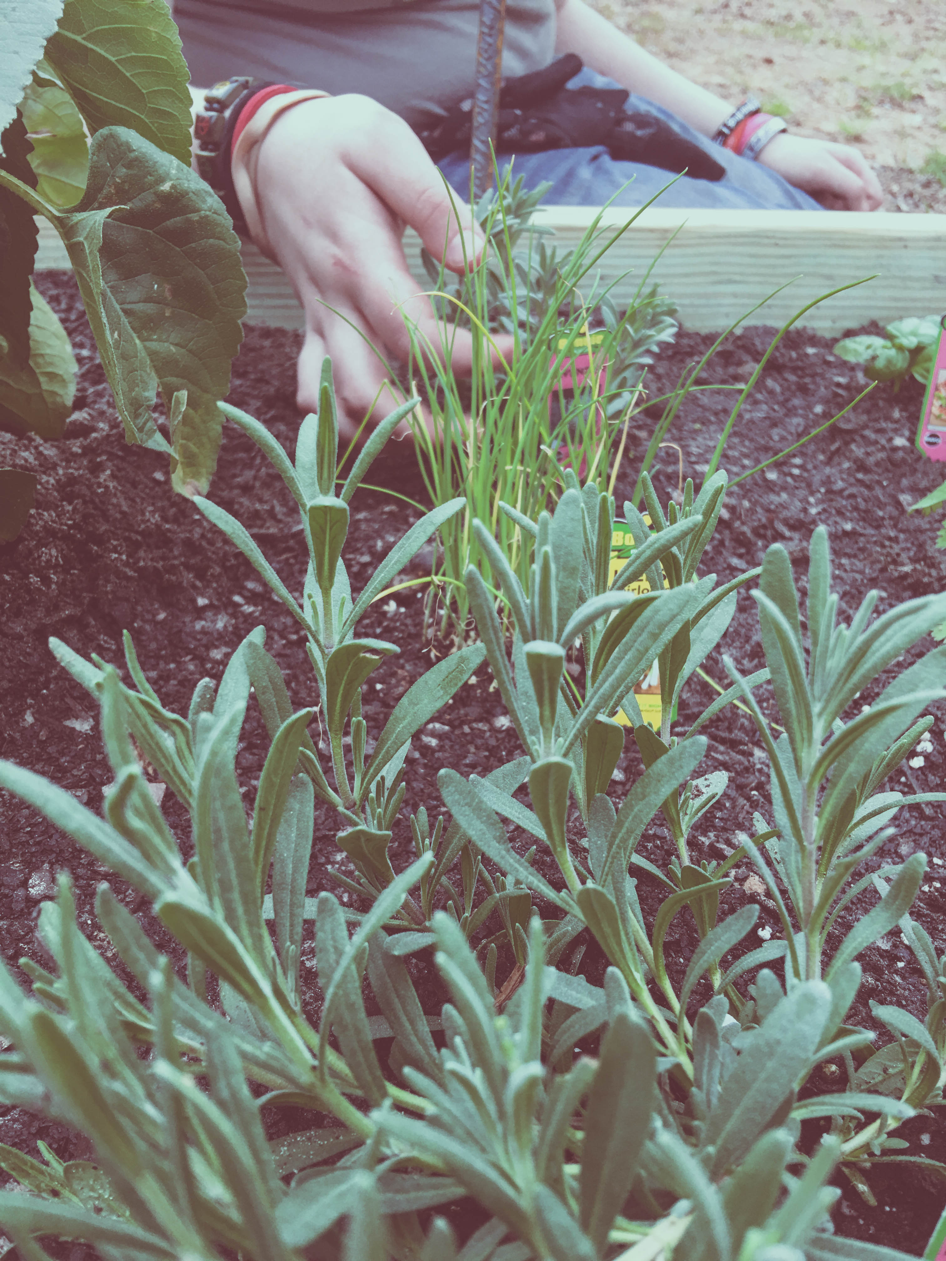 diy herb garden for beginners